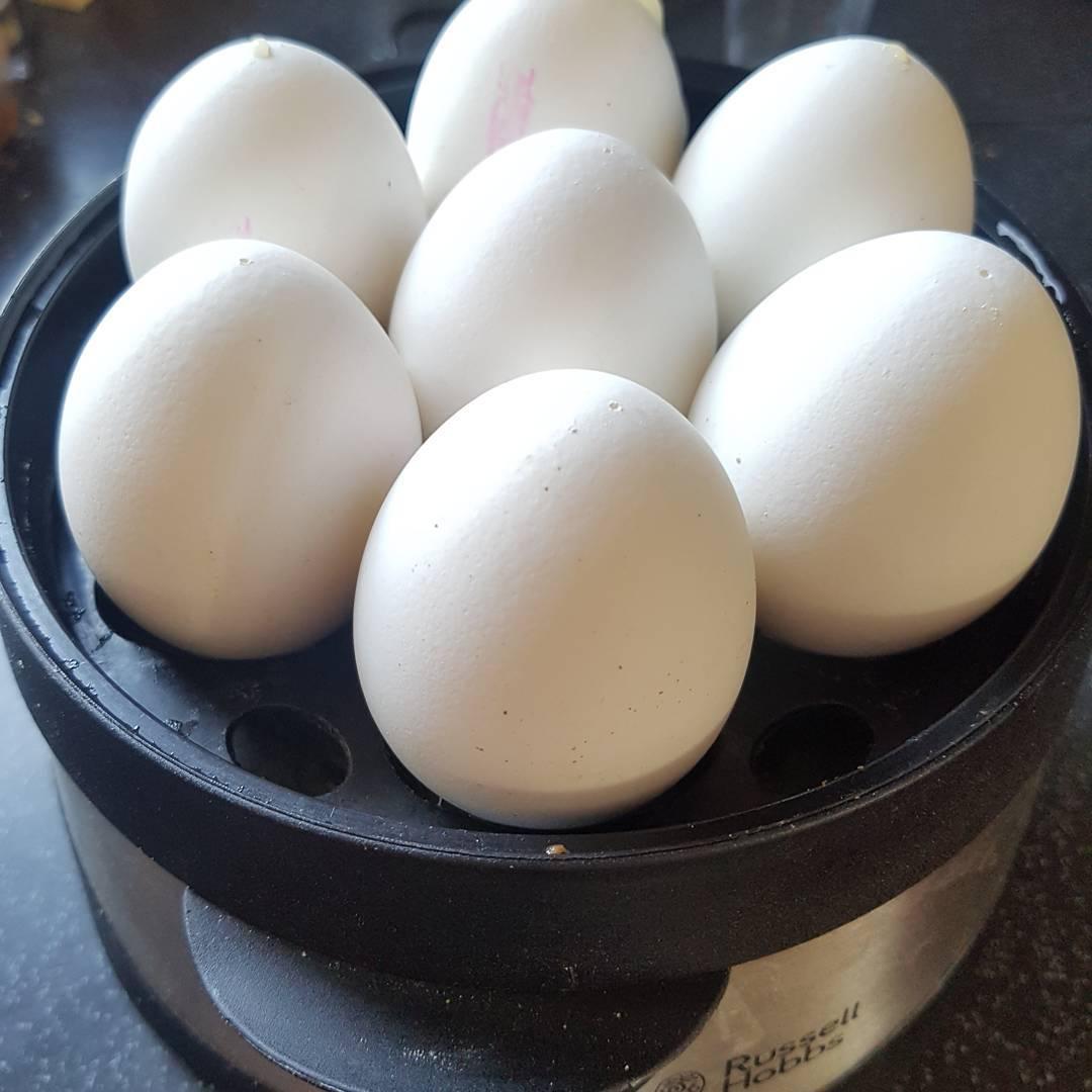 Probeessen für die Radikaldiät im April… #diät #diet #eier #eggs #protein #eiweiss #radical #fitness #training #essen #hardcore #gesundistout #goodbyegutelaune #hungersbestfriend